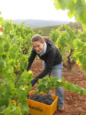 April Yap-Hennig harvesting Garnacha grapes at Bodegas Juan Carlos Sancha