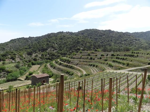 Mas Sinén, Celler Burgos Porta Winery in Poboleda, Priorat