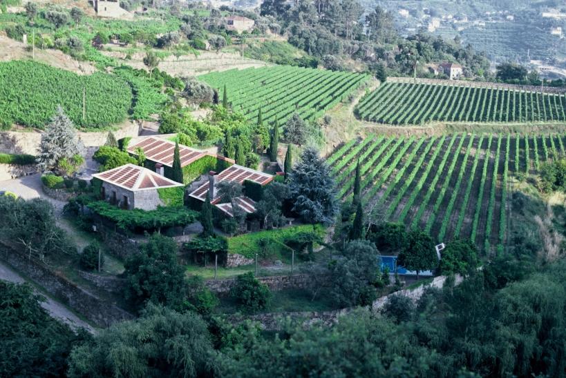 Quinta de Covela 3