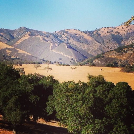 The rolling hills of St. Ynez Valley